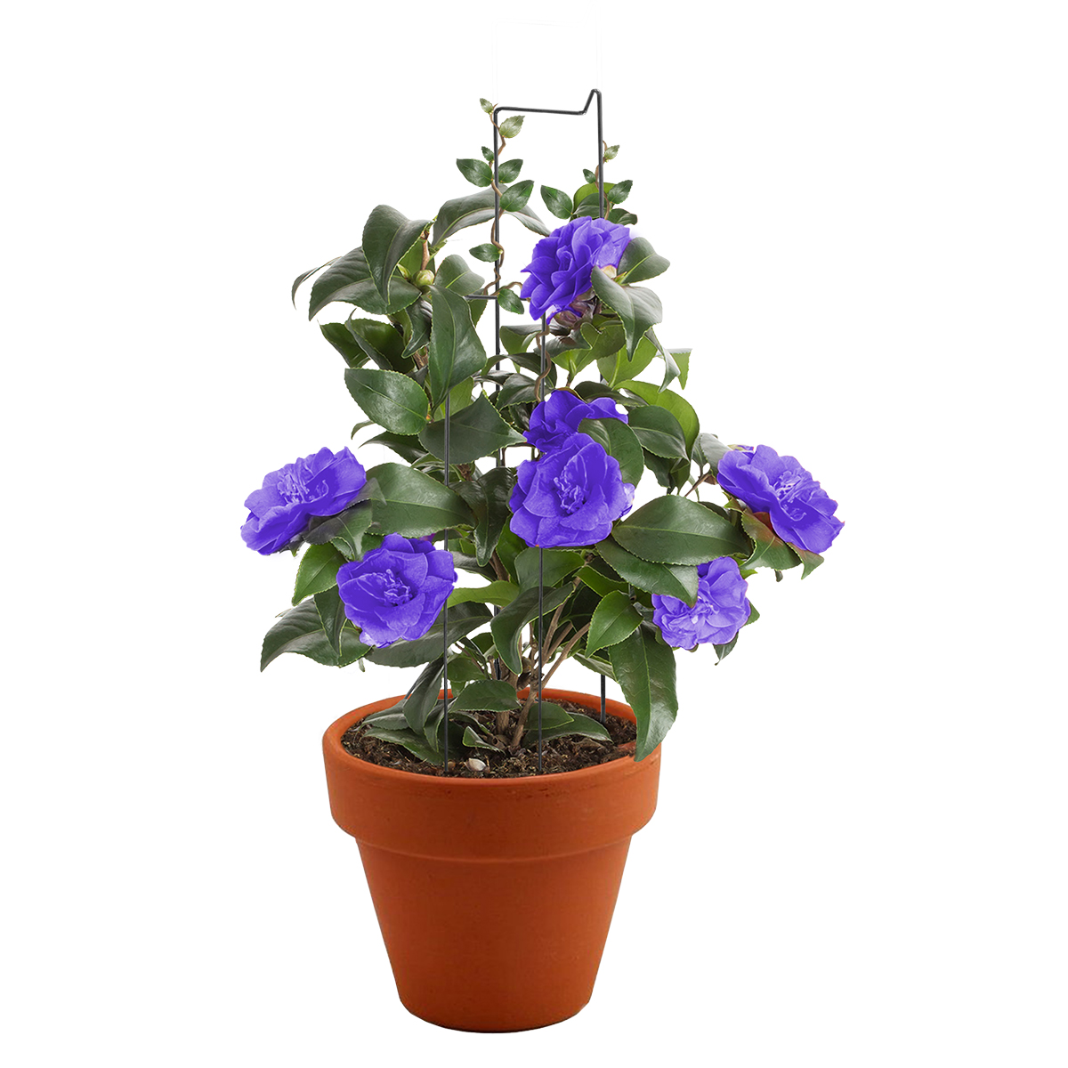 14370 Pot Plant Training Pins 200mm with plants