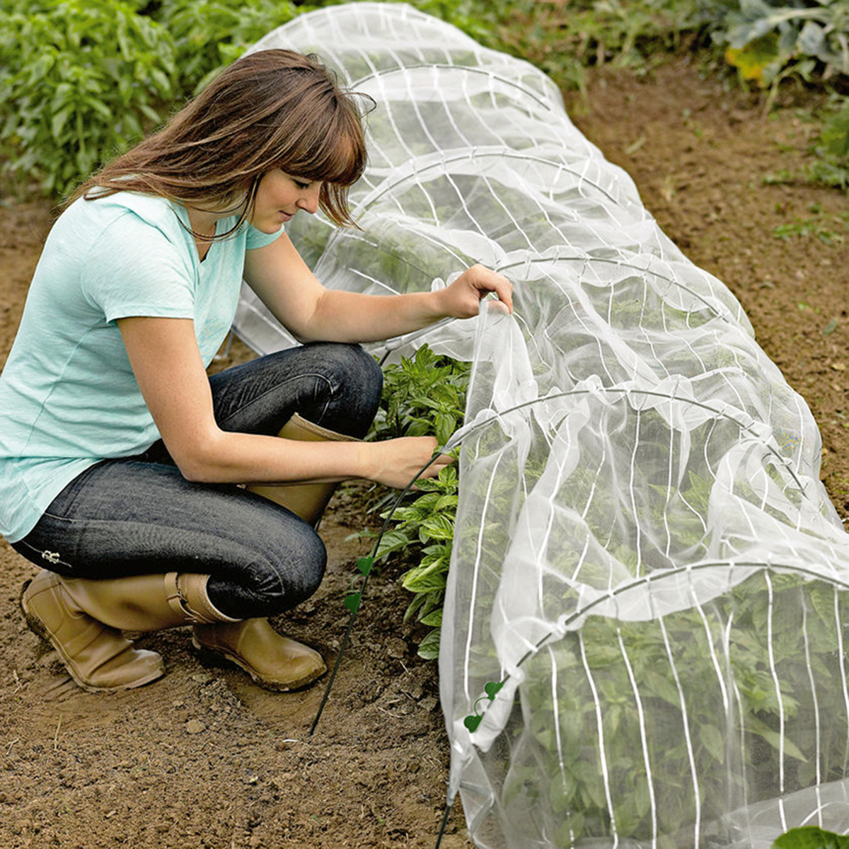 18243 insect resistant grow tunnel in situ1