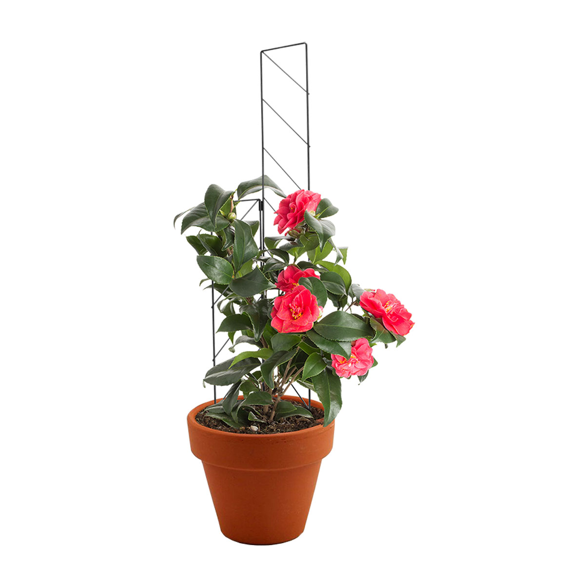 18285 mini garden trellis black