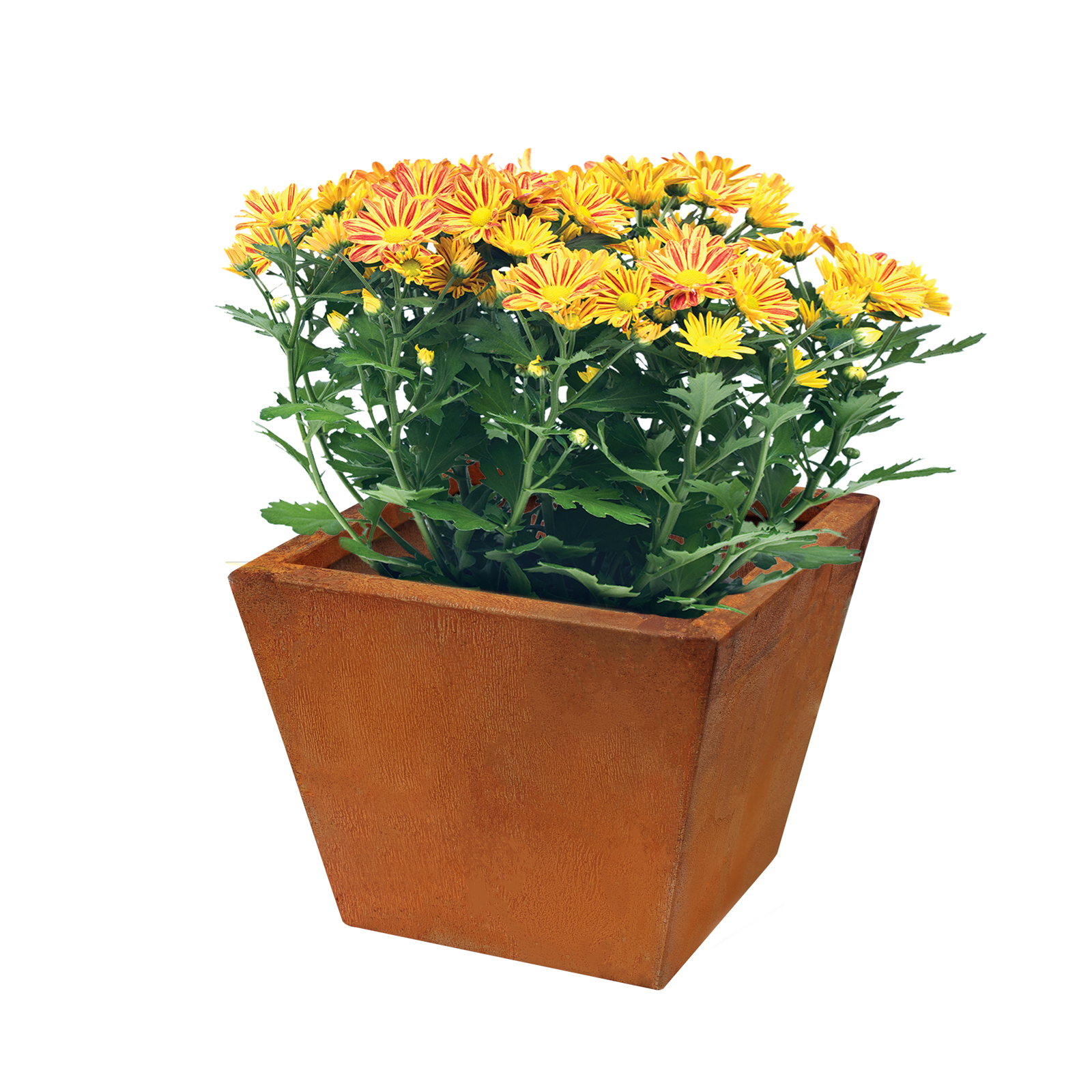 18483 copa planter with plants 250x250x200