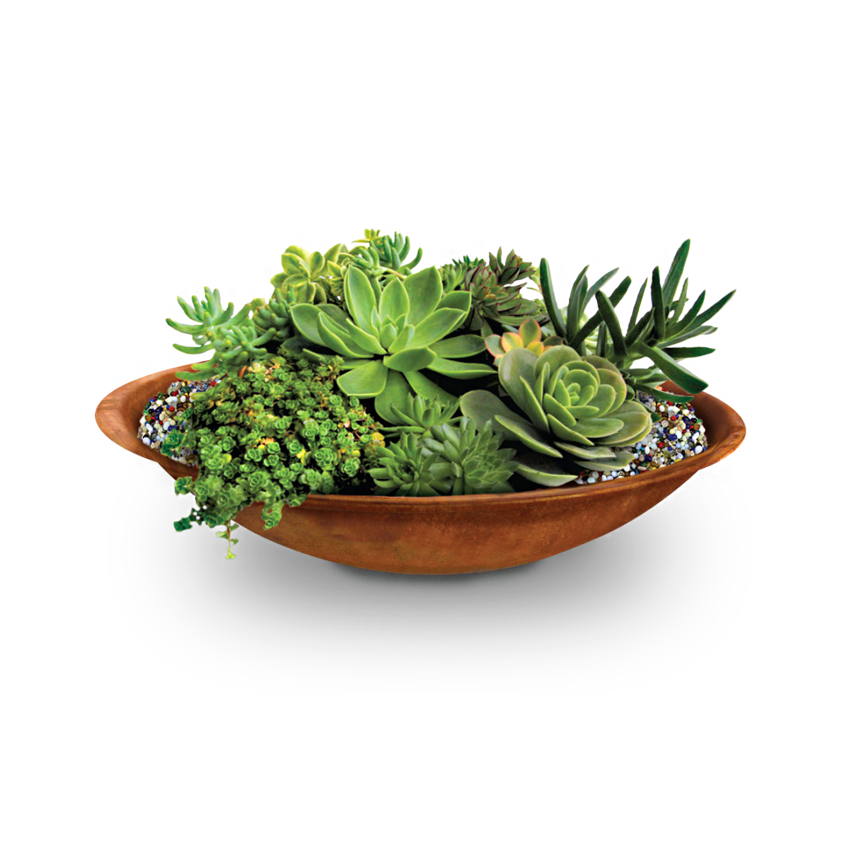 18484 copa bowl with plants