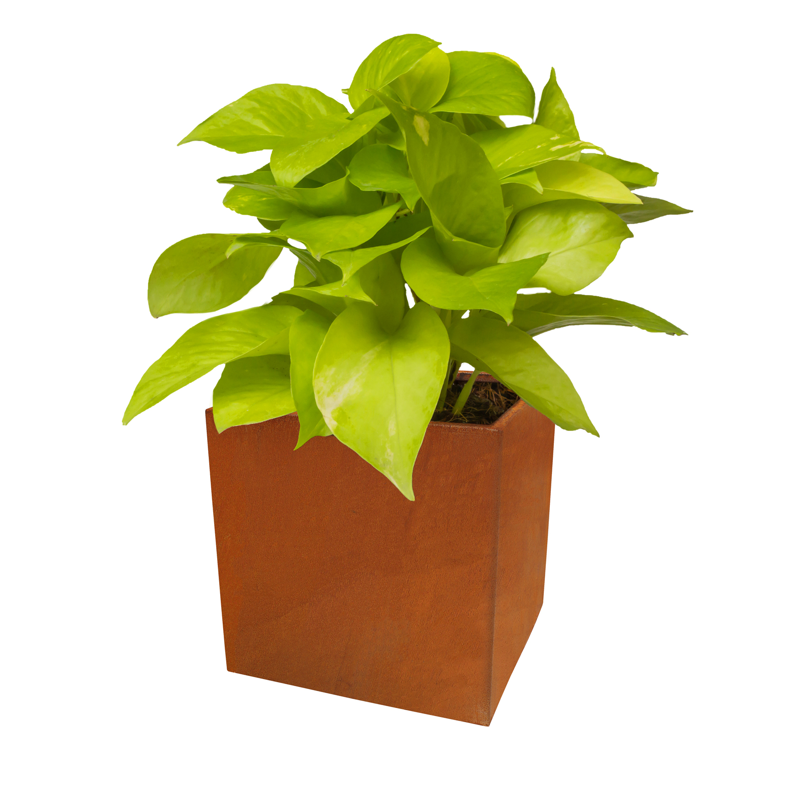 18486 cafe planter with plants 430x430x430