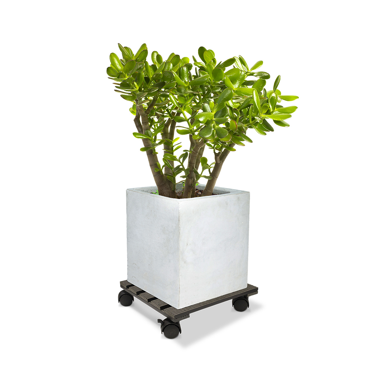 18535 Wood Poly Pot Trolley Square Charcoal 29cm with plant