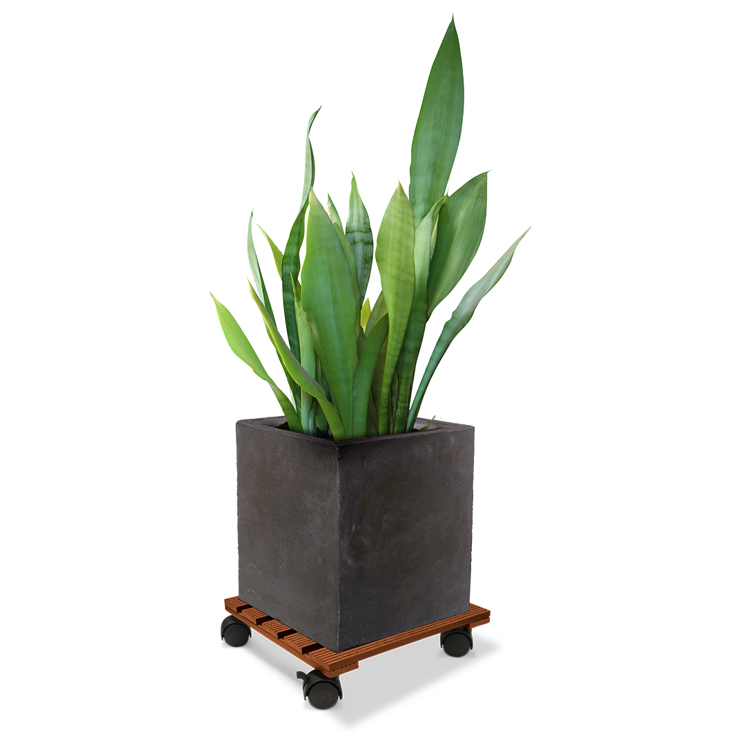 18536 Wood Poly Pot Trolley Square Merbau 29cm with plant
