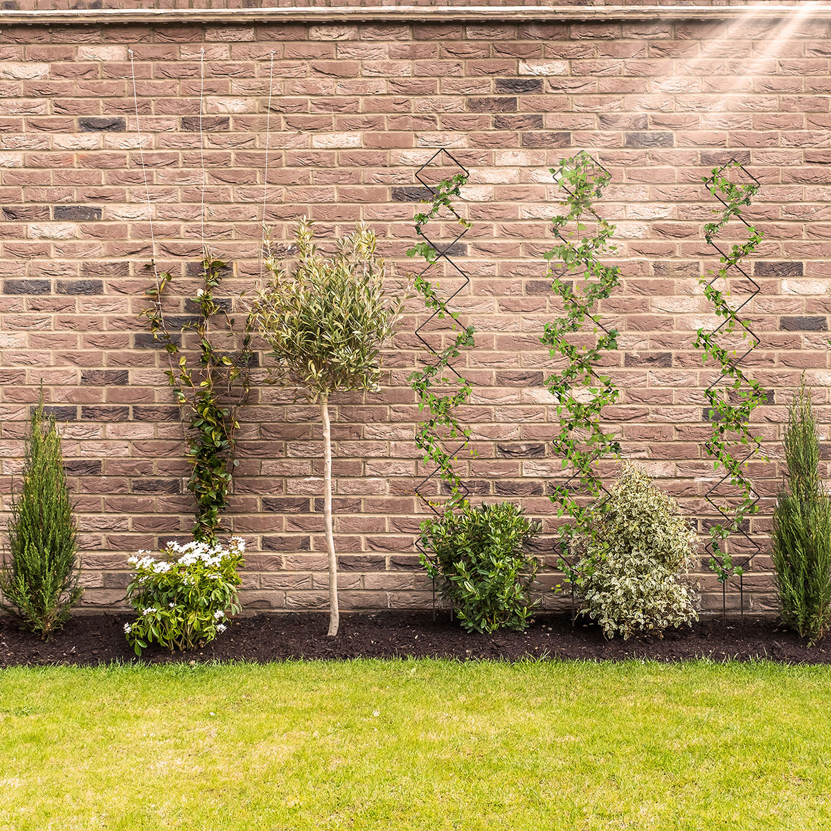 newly planted shrubs and plants against a red brick wall