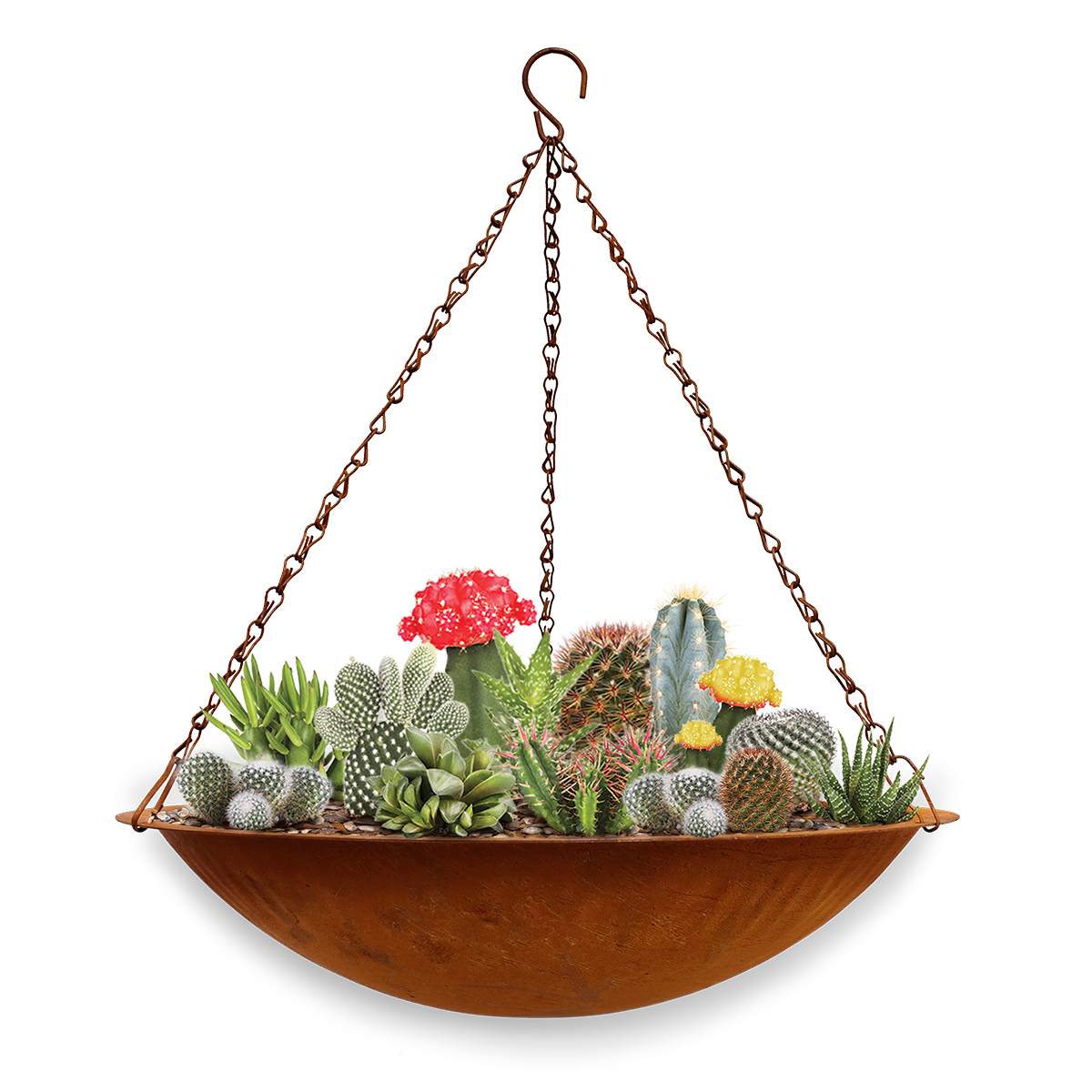 18800 hanging succulent bowl with plants