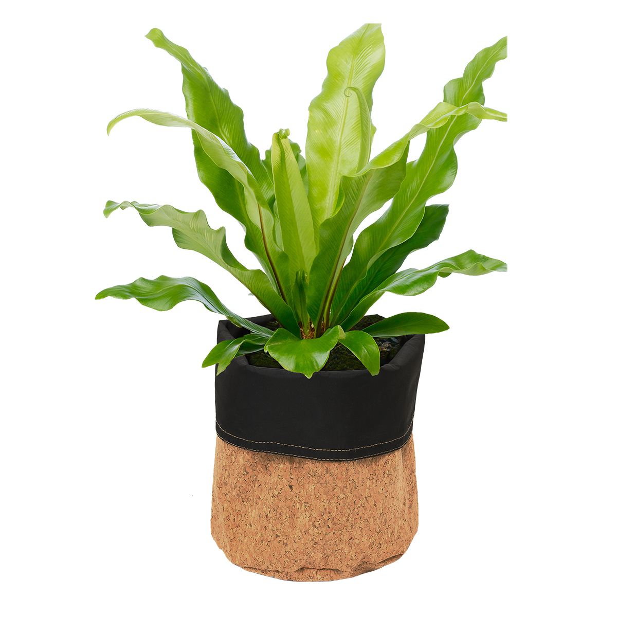 18827 Cork Planter Natural with plant