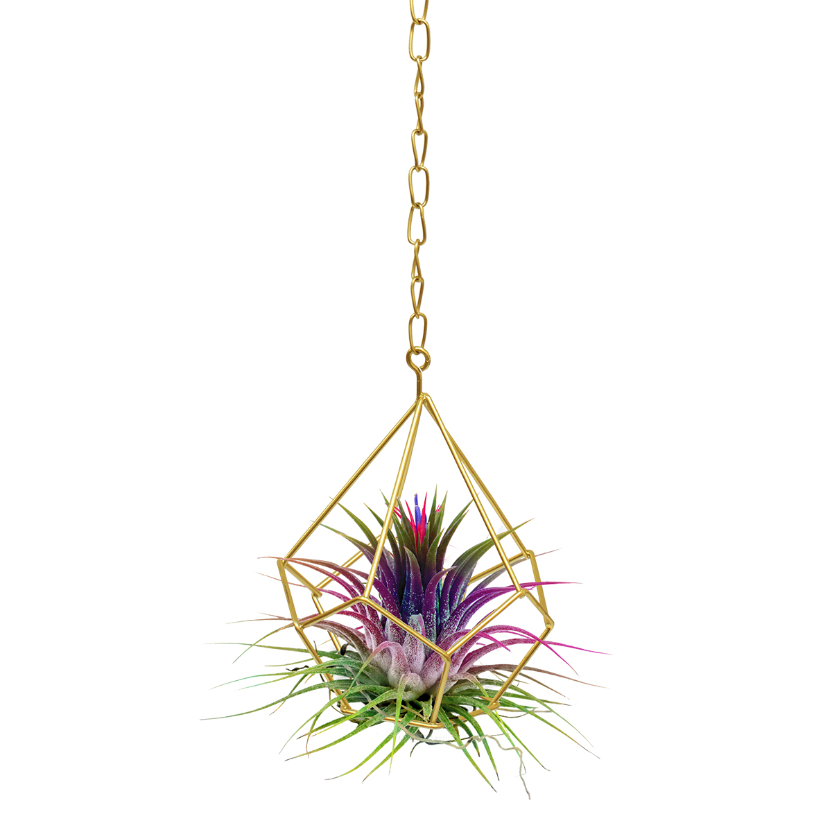 18900 Geo Hanging Planter with tillandsia