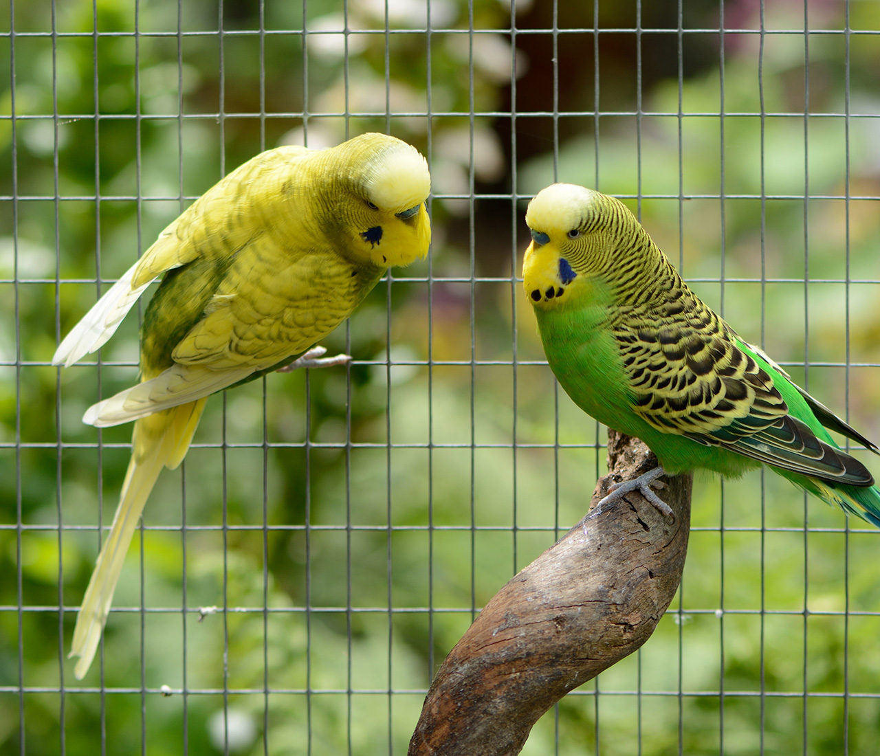 aviaries and cages 2