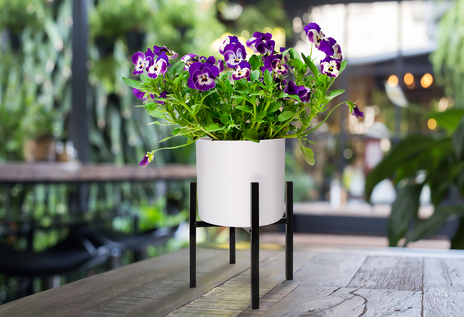 plant stand 2